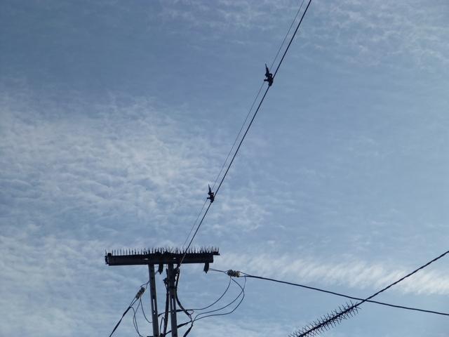 鳥フンが車に。無料対策。電柱