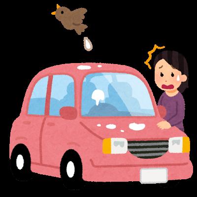 鳥のフンの対策、車
